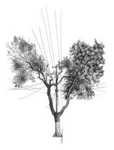 Daniel Caballero, 'Árvore nº 3'