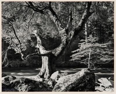 Ansel Adams, 'Morning, Merced River Canyon', 1950-printed later