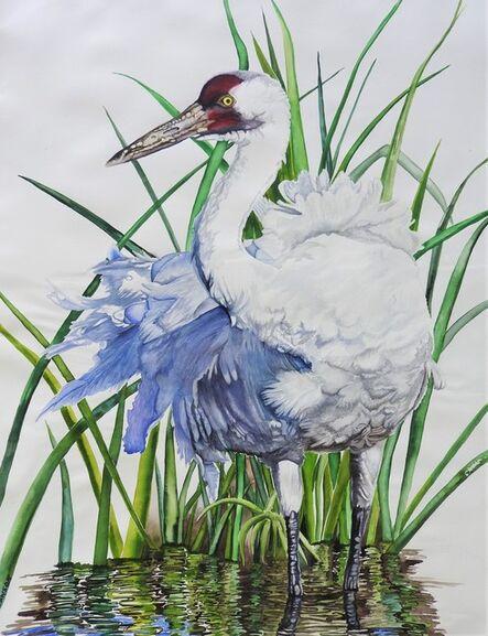 Carol Dawson, 'Wading: Whooping Crane', 2020