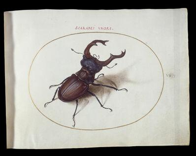 Joris Hoefnagel, 'Animalia Rationalia et Insecta (Ignis):  Plate V', ca. 1575/1580