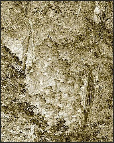 Clifford Ross, 'Harmonium V', 2007