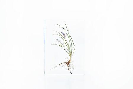 Azuma Makoto, 'Block Flower Eight, Liriope minor', 2018