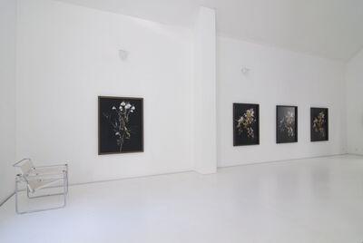 Uwe H. Seyl, 'Chrysanthemums', 2008
