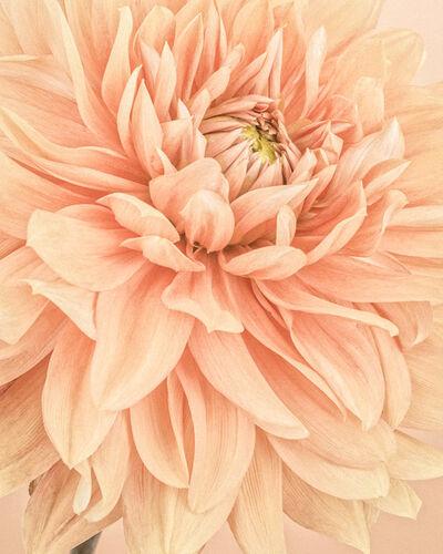 Paul Coghlin, 'Orange Dahlia Flames I ', 2015