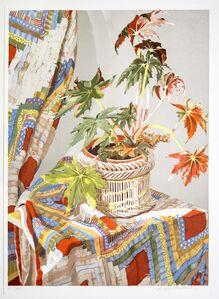 Sondra Freckelton, 'Begonia with Qulit', 1978