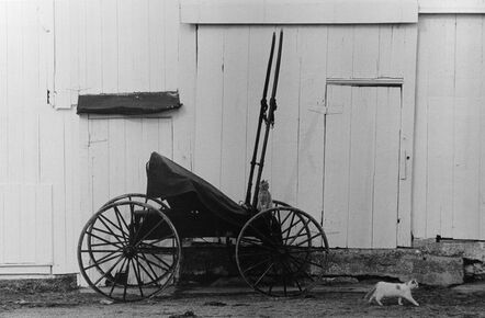 George Tice, 'Buggy and Cats', 1967