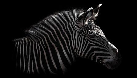 Toru Tanno, 'Subterranean †zebra', 2013