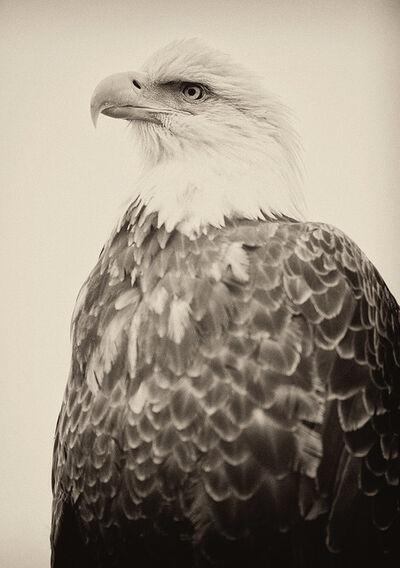 Sebastian Copeland, 'Royal Eagle, Alaska', 2013