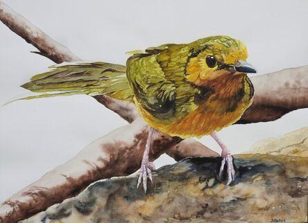Carol Dawson, 'Watching: Female Hooded Warbler', 2020