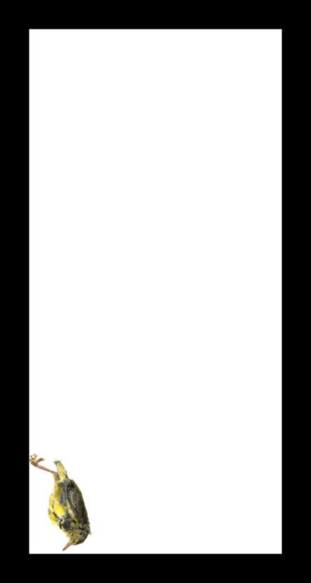 Thaddeus Holownia, 'Mourning Warbler', 2017
