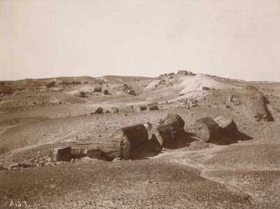 A.C. Vroman, 'In the Petrified Forest (General View, Middle Park)', ca. 1895-1897