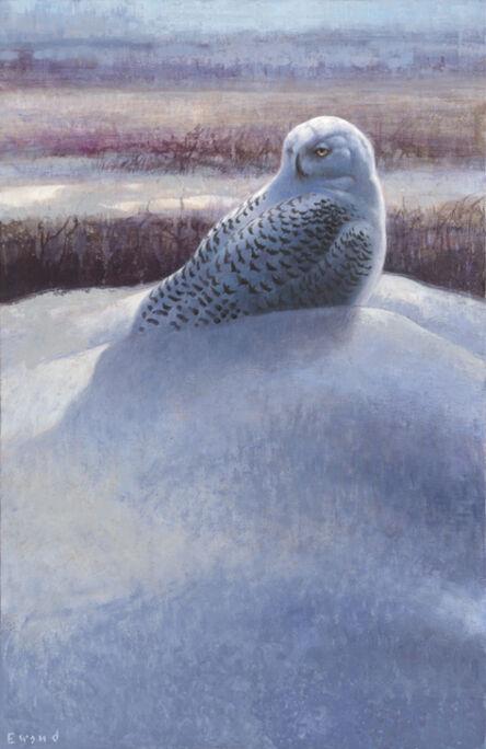 Ewoud De Groot, 'Snowy Owl'