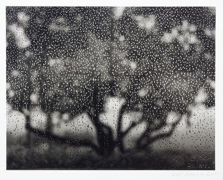 Ruth Bernhard, 'Appletree', 1975