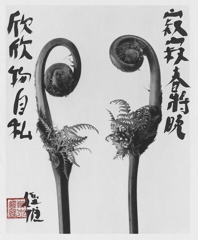 Nobuyoshi Araki, 'KAIN 花淫', 2018