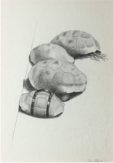 Gilles Aillaud, 'Tortues', 1975