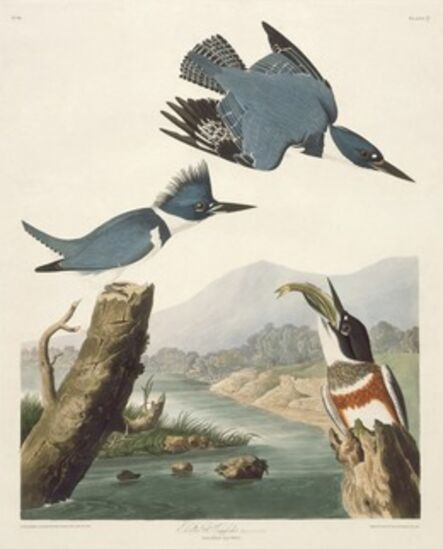 Robert Havell after John James Audubon, 'Belted Kingsfisher', 1830