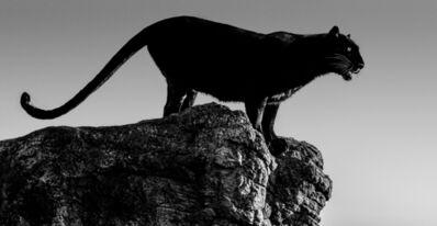 David Yarrow, 'Black Cat', 2019