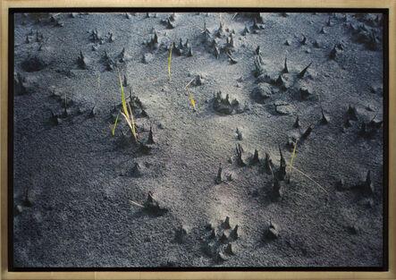 Meridel Rubenstein, 'Re-emerging Grass, Mt. Bromo Volcano E. Java', 2011