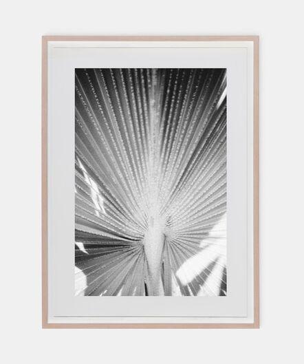 Fiona Ones, 'Palm', 2020
