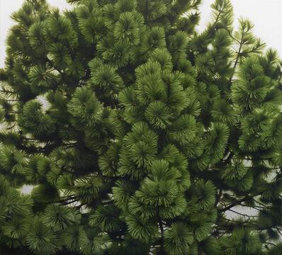 Melissa Doherty, 'Young Pine 2', 2013