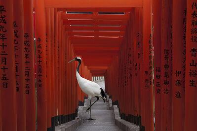 Karen Knorr, 'The Journey, HieTorii , Tokyo', 2015