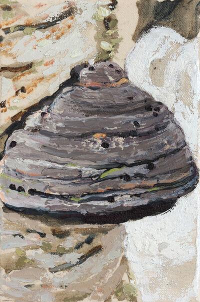 Sara-Vide Ericson, '(polypore)', 2021