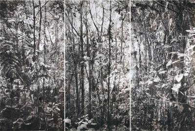 Tomás Ochoa, 'Bosques Lanzas Galaica', 2017