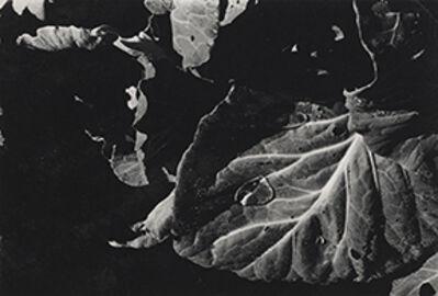 Jay DeFeo, 'Untitled', 1972