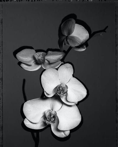 Gian Paolo Barbieri, 'Black and White Phalenopsis', 2002