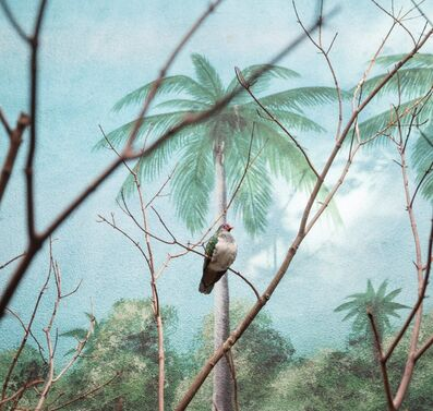 Eric Pillot, 'Wompoo fruit dove and palm trees ', 2015
