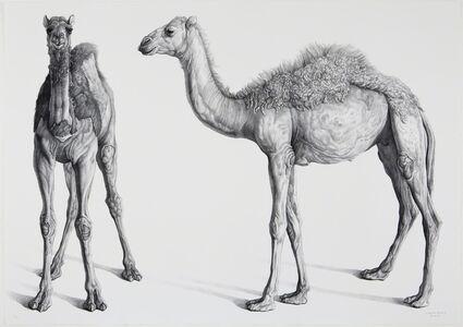 Claudio Bravo, 'Dromedarios (Camels)', 2008
