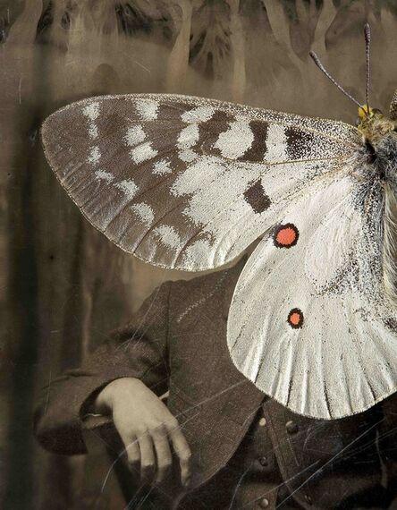 Jo Whaley, 'Parnassius apollo'