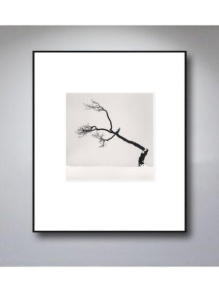 Michael Kenna, 'Kussharo Lake Tree, Study 6, Kotan, Hokkaido, Japan. 2007', 2007