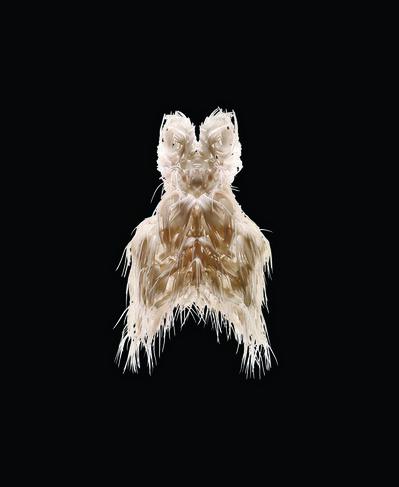 Iris van Herpen, 'Biopiracy Dress', 2014