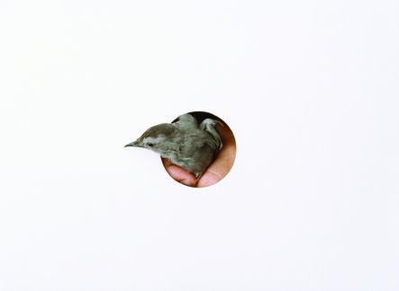 Yola Monakhov Stockton, 'O. Gray Catbird. Constitution Marsh Audubon Center and Sanctuary, Cold Spring, NY', 2011