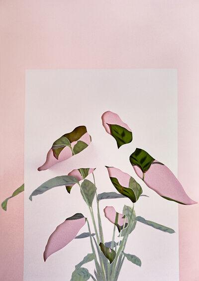 Alma Haser, 'Calatheas', 2018