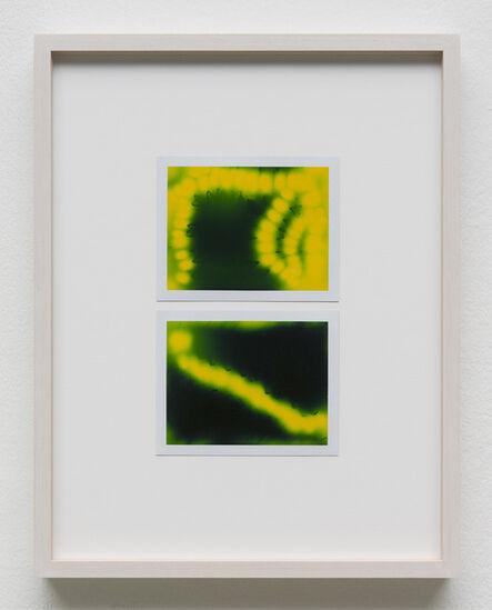 Peter Miller, 'Photuris #22', 2013
