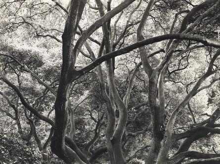 Dorothea Lange, 'Under the Oaks, 1163 Euclid Avenue, Berkeley, California', 1952–1954