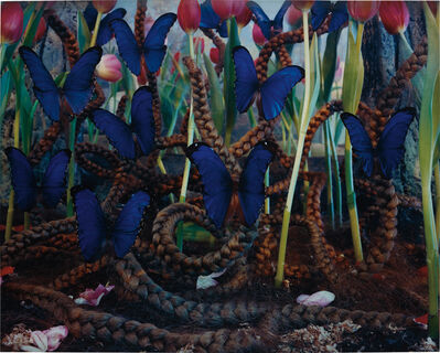 Gregory Crewdson, 'Untitled (Blue Butterflies)', 1997