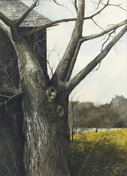 Gregory Sumida, 'Tree with Bare Branches', 1972