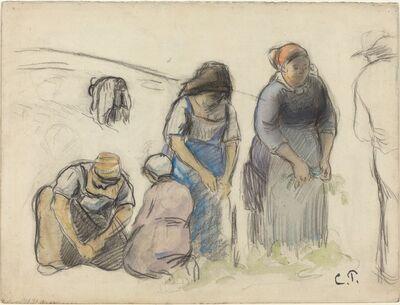 Camille Pissarro, 'Pea Harvesters [recto]', ca. 1880