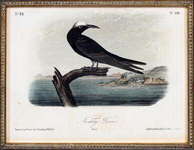 John James Audubon, 'Noddy Tern', ca. 1832