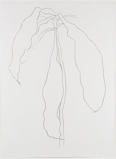 Ellsworth Kelly, 'Dracena II, from Series of Plant and Flower Lithographs', 1983-1985