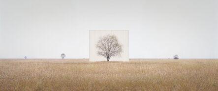 Lee Myoung Ho, 'Tree…#3', 2012