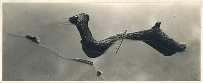 Harry Callahan, 'Untitled (branches in water)'