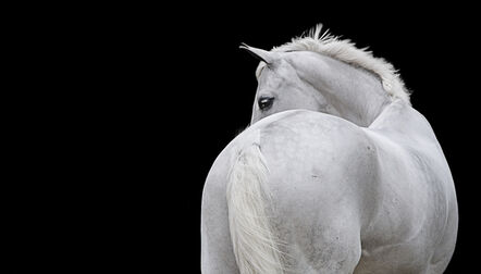 Bob Tabor, 'Horse 91 - black and white photography', 2014