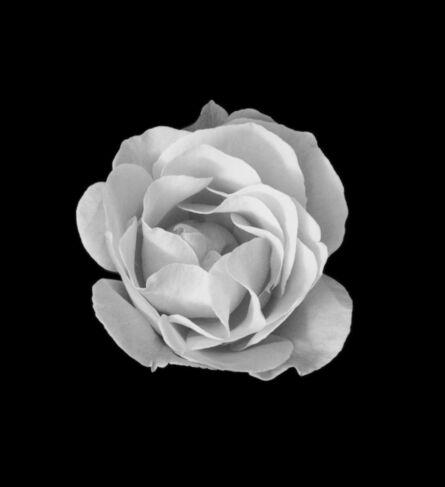 Mariana Cook, 'June Rose, Glion, Switzerland, 17 June 1999, 5:45pm', 1999