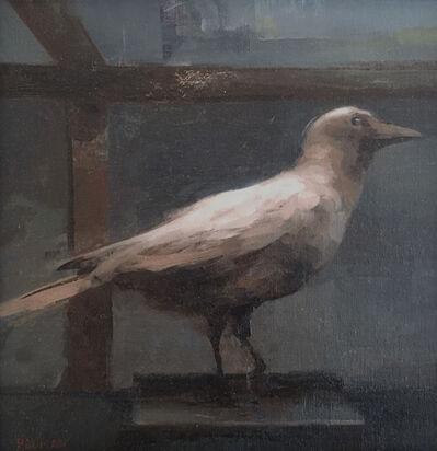 Stephen Bauman, 'White Crow', 2016