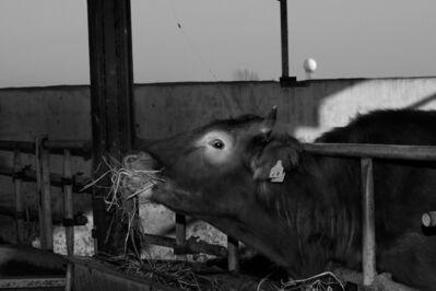 Noh Suntag, 'the strAnge ball #016', 2004-2007