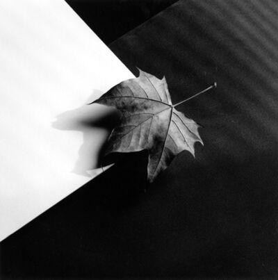 Robert Mapplethorpe, 'Leaf', 1986